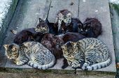 Stray Cats Family