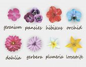 stock photo of hibiscus  - vector illustration of floral set - JPG