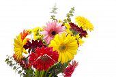 Gerberas Bouquet