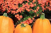 Trio of big colorful pumpkins