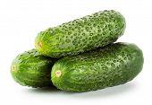 Three Ripe Bright Cucumber