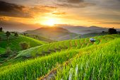 Rice Terraces In Northern Of Thailand