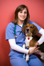 image of medical office  - A veterinarian posing with a purebred beagle dog - JPG