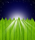 Leaves Frame On Stars In The Night Sky Background