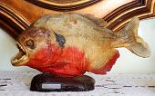 Piranha Red Embalmed Ornament