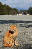 A Cat Sitting In Front Of The Koyto Palace