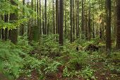Pacific Northwest, Second Growth Forest