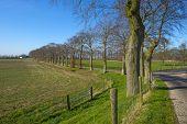 Row of trees along a sunny road