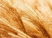 Dried Weed Grass In The Wind
