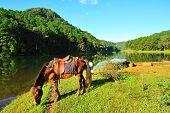 A Horse At Pang-ung Lake