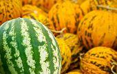 Organic Watermelon And Casaba Melon Heap