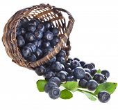 blueberries in wicker basket close up isolated on white background