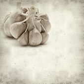 Garlic on Old Paper Background