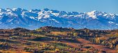 Colorful autumnal vineyards and snowy mountains on background in Piedmont, Northern Italy (panorama)