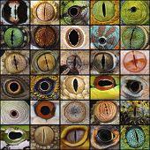 Reptile eye collection