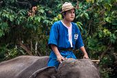 Mahout ride an elephant