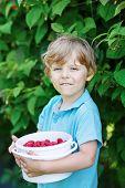 Little Blond Boy Having Fun With Picking Berries On Raspberry Farm