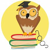 Crazy owl sitting on books