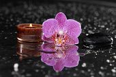 Beautiful pink orchid with candle on wet background