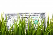 One dollar note in grass
