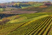 Green, yellow and orange vineyards on the hills of Piedmont, Italy in autumn.