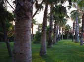 Avenue Of Royal Palm Trees At The Tropical Garden