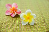 Pink and white frangipani flower on green mat