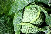Leaf Veins Of Green Cabbage With Embossed Ripples