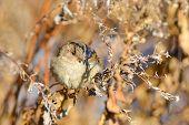 Sparrow in autumn branch
