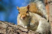 Squirrel on tree branch