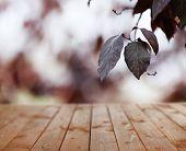 Wooden board on dark autumn background