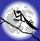 silhouette of praying mantis