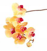 orange  orchid branch