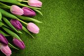 Pink tulips on meadow