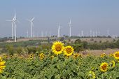Sunflower Field Wind Turbine