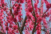 Beautiful Tender Tree Blossom