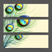 Website header or banner set with colorful feathers of peacock on yellow background.