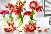 Colorful spring tulips in old milk bottles on table