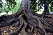 Trees roots