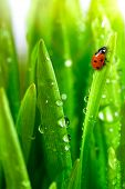 stock photo of grass area  - fresh green grass with water drops close up - JPG