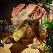Dinasours Unearthed - Protoceratops