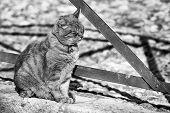 cat sitting outdoor