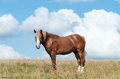 Beautiful Brown Horse On The Field