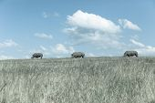 stock photo of wilder  - Rhino - JPG