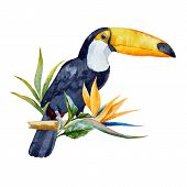 picture of toucan  - Beautiful vector image with nice watercolor toucan with flowers - JPG