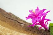 pic of decoupage  - Gorgeous pink flower from a cactus on a rustic wooden board - JPG