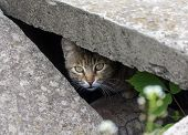 picture of slit  - Stray cat peeking from the slit - JPG