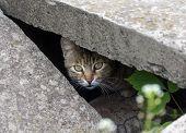 foto of slit  - Stray cat peeking from the slit - JPG