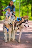 stock photo of sled-dog  - girl and little boy riding on scooter in team of two sled dogs - JPG