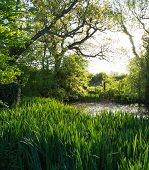 picture of flying-insect  - Wild pond full of flying insects with water irises under trees in afternoon sun - JPG